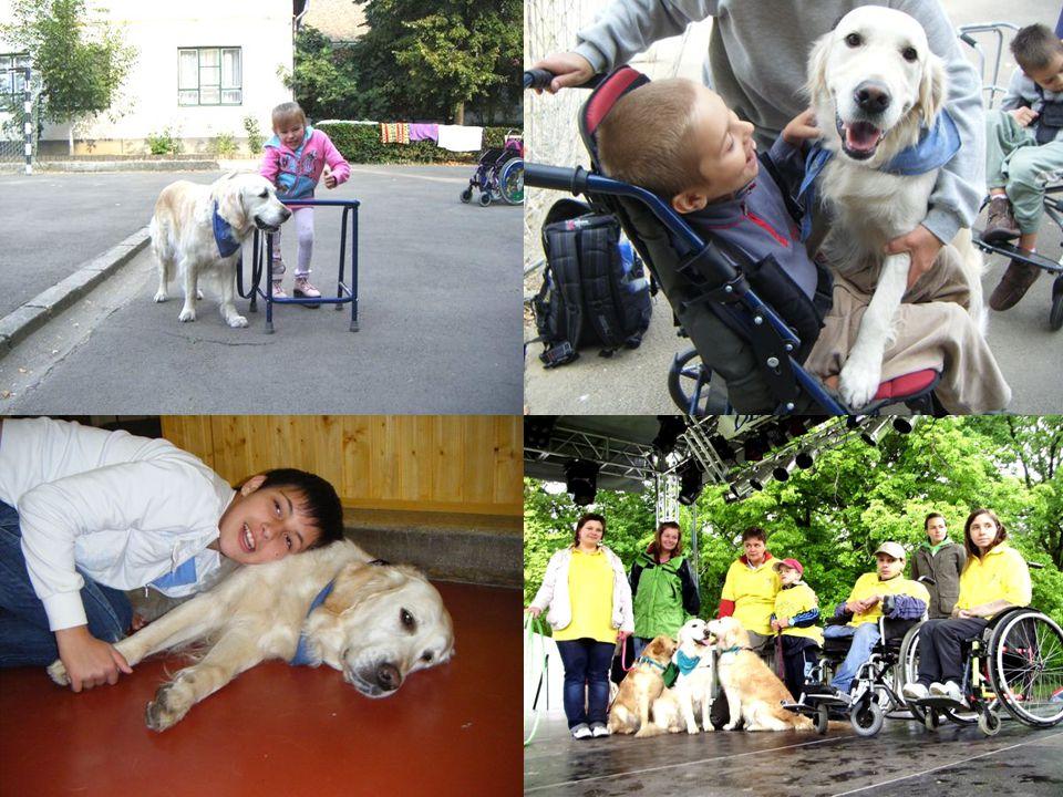 Kutyaterápiás foglalkozás