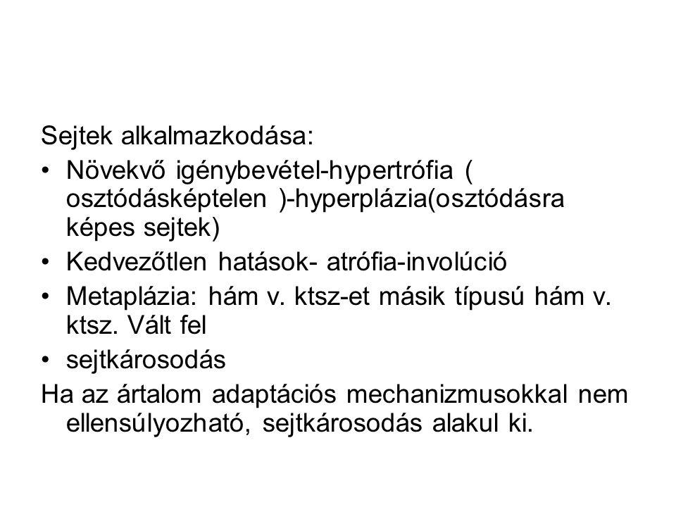 Sejtek alkalmazkodása: •Növekvő igénybevétel-hypertrófia ( osztódásképtelen )-hyperplázia(osztódásra képes sejtek) •Kedvezőtlen hatások- atrófia-involúció •Metaplázia: hám v.