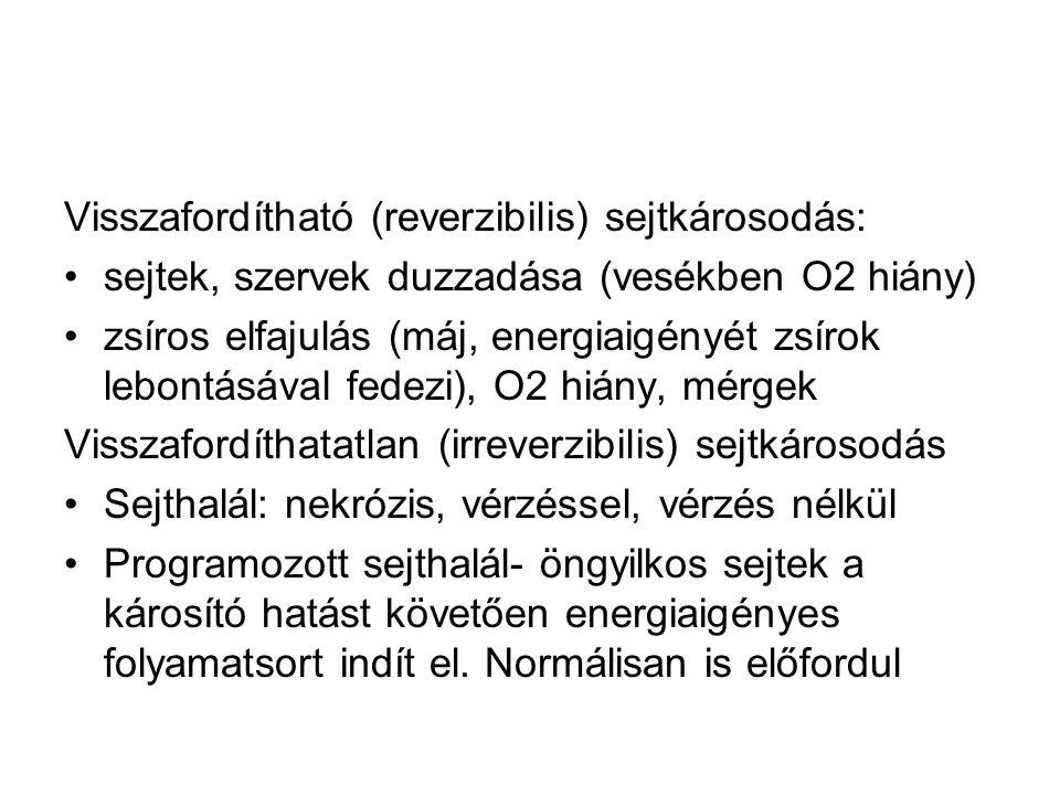 Visszafordítható (reverzibilis) sejtkárosodás: •sejtek, szervek duzzadása (vesékben O2 hiány) •zsíros elfajulás (máj, energiaigényét zsírok lebontásával fedezi), O2 hiány, mérgek Visszafordíthatatlan (irreverzibilis) sejtkárosodás •Sejthalál: nekrózis, vérzéssel, vérzés nélkül •Programozott sejthalál- öngyilkos sejtek a károsító hatást követően energiaigényes folyamatsort indít el.