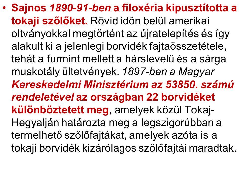 •Sajnos 1890-91-ben a filoxéria kipusztította a tokaji szőlőket. Rövid időn belül amerikai oltványokkal megtörtént az újratelepítés és így alakult ki