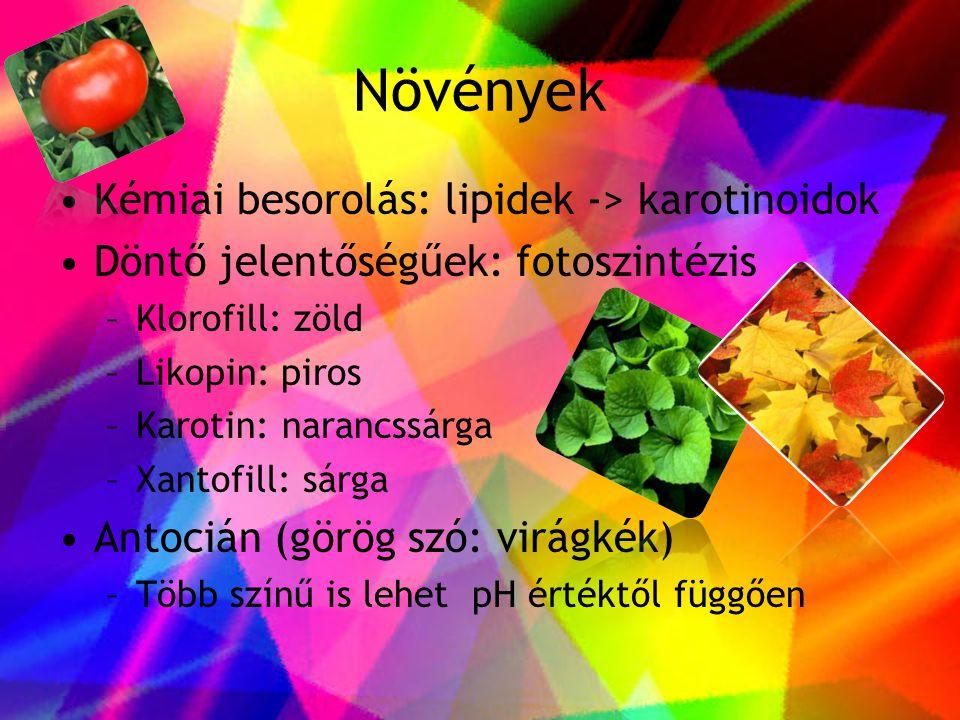 Növények •Kémiai besorolás: lipidek -> karotinoidok •Döntő jelentőségűek: fotoszintézis –Klorofill: zöld –Likopin: piros –Karotin: narancssárga –Xanto