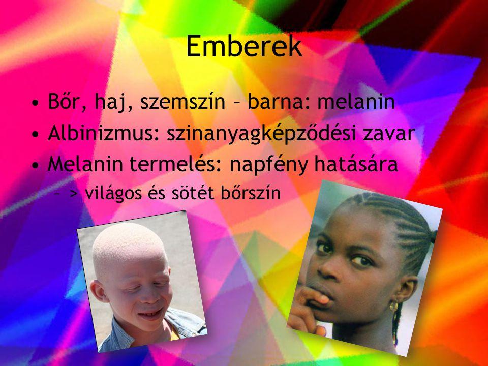 Emberek •Bőr, haj, szemszín – barna: melanin •Albinizmus: szinanyagképződési zavar •Melanin termelés: napfény hatására –> világos és sötét bőrszín