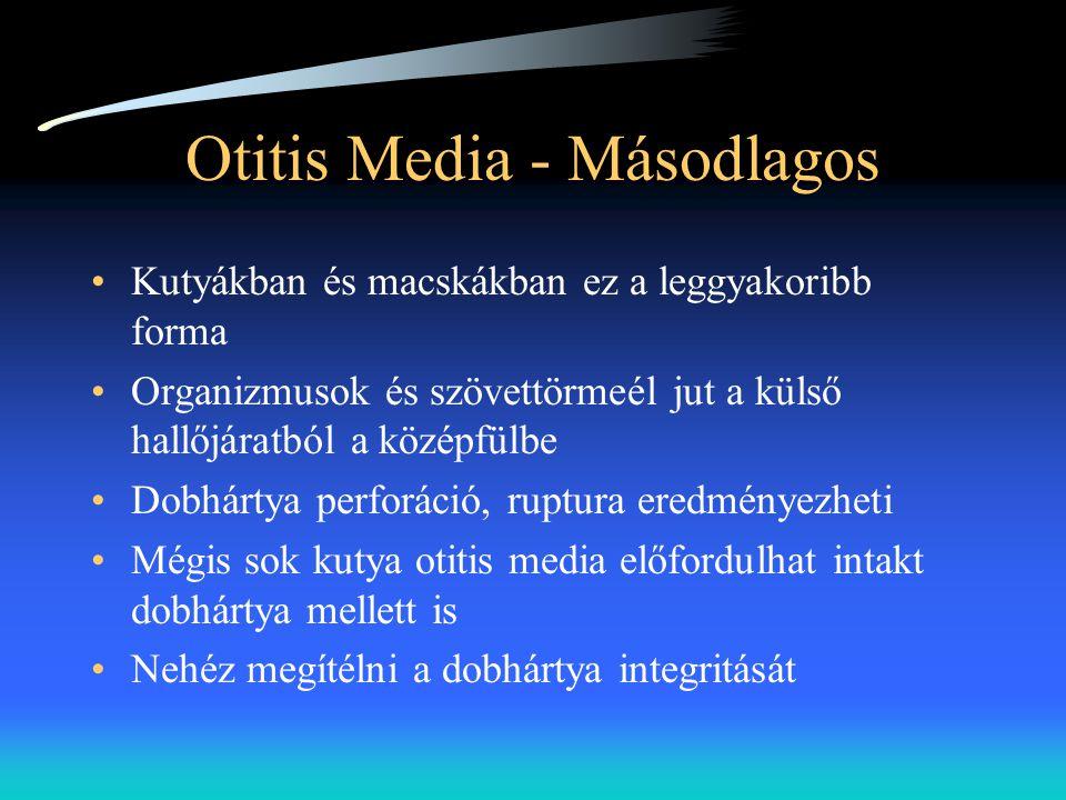 Otitis Media - Másodlagos •Kutyákban és macskákban ez a leggyakoribb forma •Organizmusok és szövettörmeél jut a külső hallőjáratból a középfülbe •Dobh