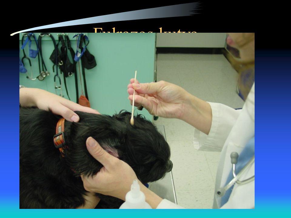 Otitis Externa •Teljes fülvizsgálat (hallójárat, dobhártya) •Fül citológia (organizmusok, sejtek) •A hallójáratok kimosása a cerumen és a szövettörmelék eltávolítása céljából •Kezelés a megfelelő helyi/szisztémás gyógyszerrel