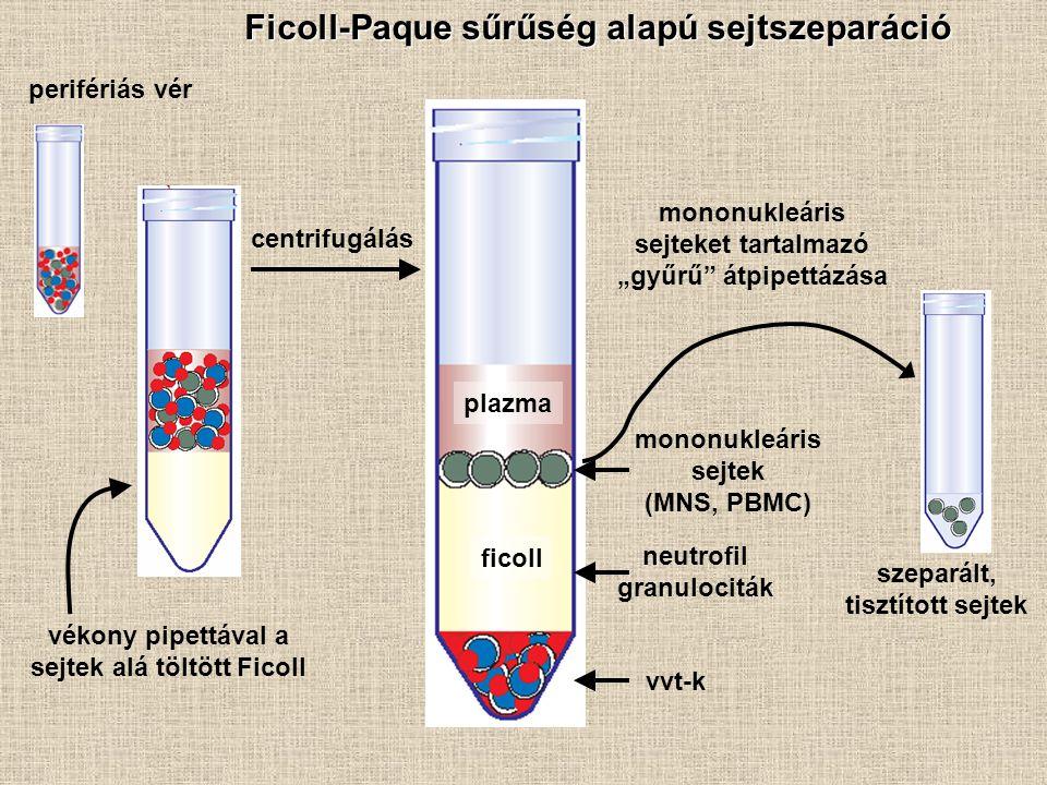 Ficoll-Paque sűrűség alapú sejtszeparáció perifériás vér vékony pipettával a sejtek alá töltött Ficoll centrifugálás szeparált, tisztított sejtek plaz