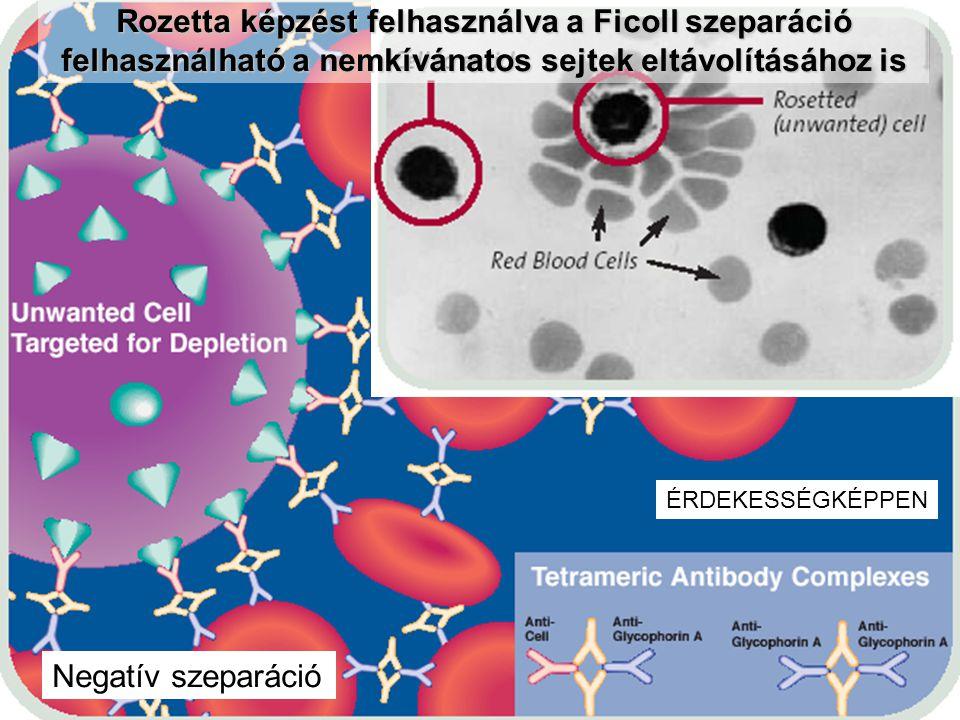 Rozetta képzést felhasználva a Ficoll szeparáció felhasználható a nemkívánatos sejtek eltávolításához is ÉRDEKESSÉGKÉPPEN Negatív szeparáció