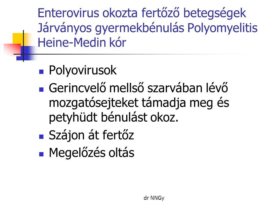 Enterovirus okozta fertőző betegségek Járványos gyermekbénulás Polyomyelitis Heine-Medin kór  Polyovirusok  Gerincvelő mellső szarvában lévő mozgatósejteket támadja meg és petyhüdt bénulást okoz.