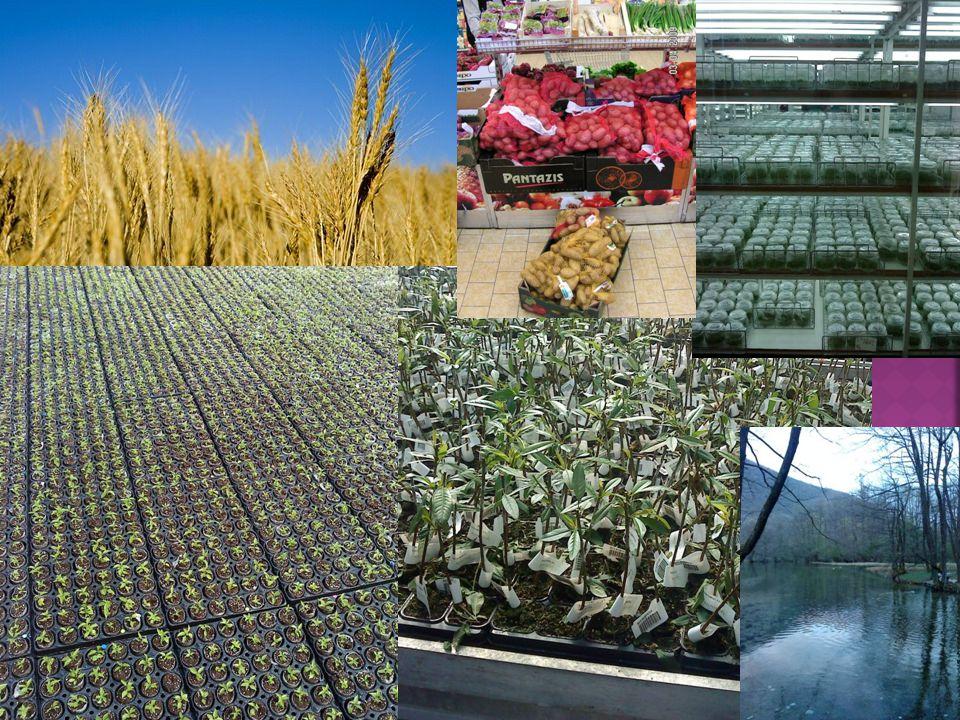  Mezőgazdasági termelés biztonsága;  Élelmiszerbiztonság;  Környezet hosszú távú fenntartása;  Az agrárkörnyezet védelme, (különösen a termőföldjeink megőrzése – talajvédelem -)  Okszerű és fenntartható, integrált növényvédelem, növényegészségügy.