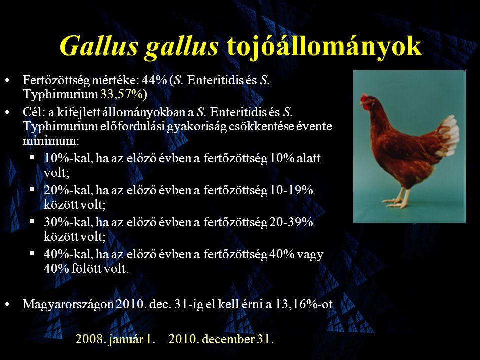 Gallus gallus tojóállományok •Fertőzöttség mértéke: 44% (S.