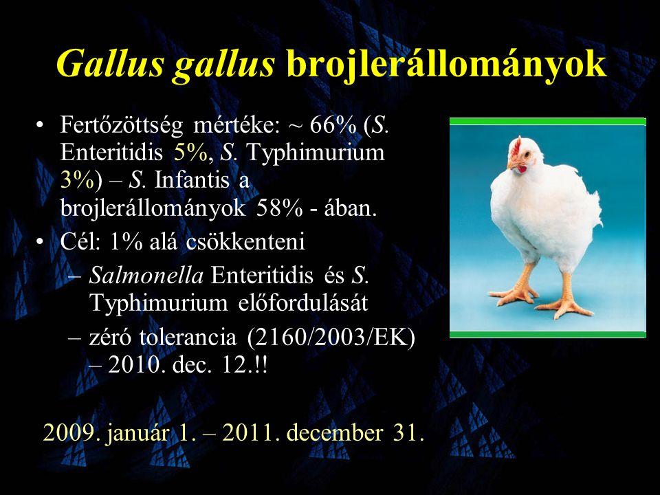 Gallus gallus brojlerállományok •Fertőzöttség mértéke: ~ 66% (S.