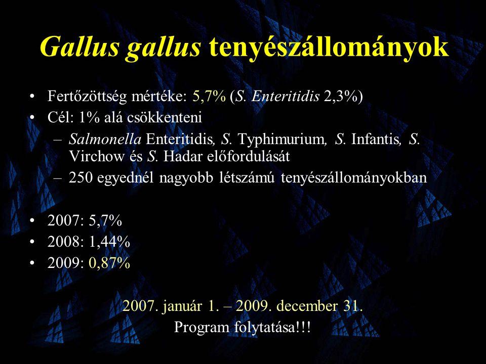 Gallus gallus tenyészállományok •Fertőzöttség mértéke: 5,7% (S.