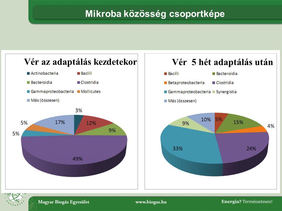 Mikroba közösség csoportképe Vér az adaptálás kezdetekor Vér 5 hét adaptálás után