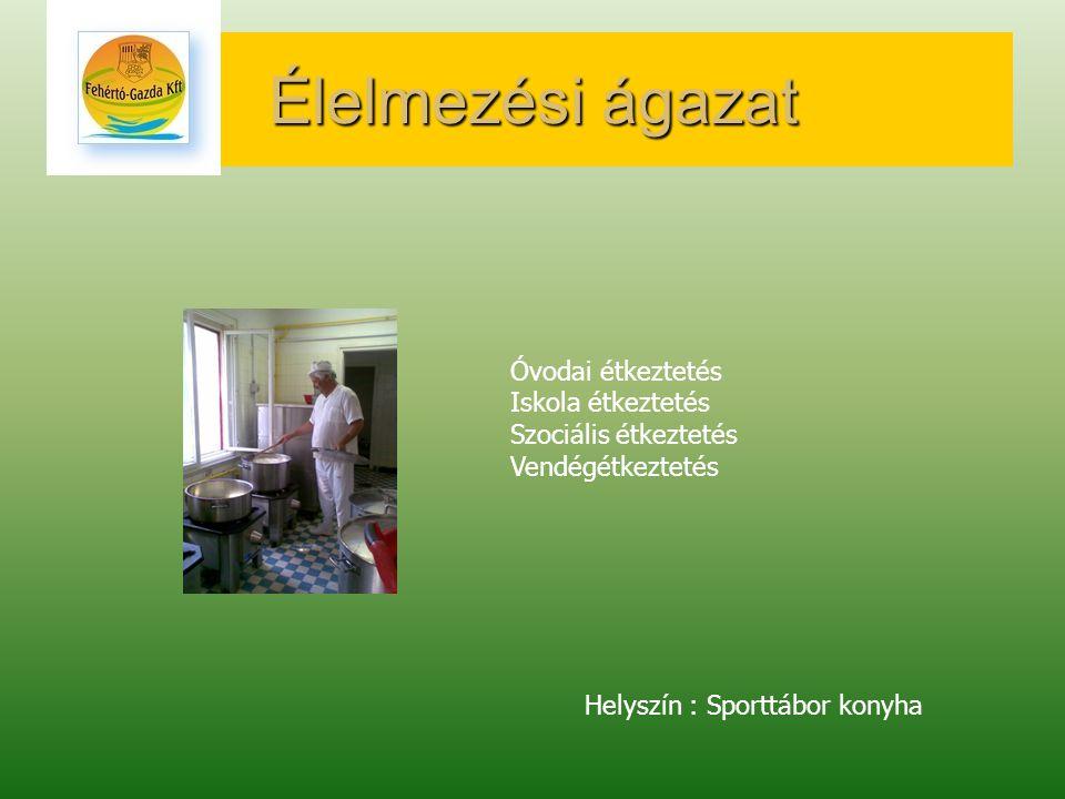 Élelmezési ágazat Óvodai étkeztetés Iskola étkeztetés Szociális étkeztetés Vendégétkeztetés Helyszín : Sporttábor konyha