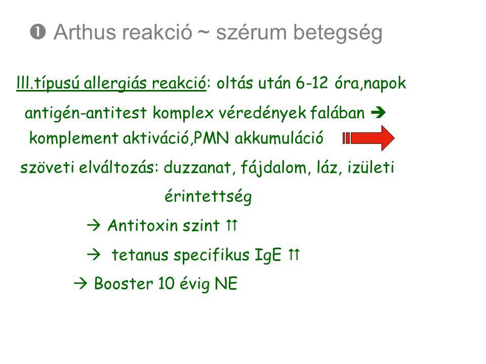  Arthus reakció ~ szérum betegség lll.típusú allergiás reakció: oltás után 6-12 óra,napok antigén-antitest komplex véredények falában  komplement ak
