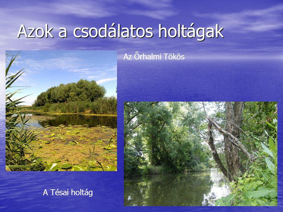 A magyar-szlovák együttműködés a vízminőségi kárelhárítás területén • 2002.