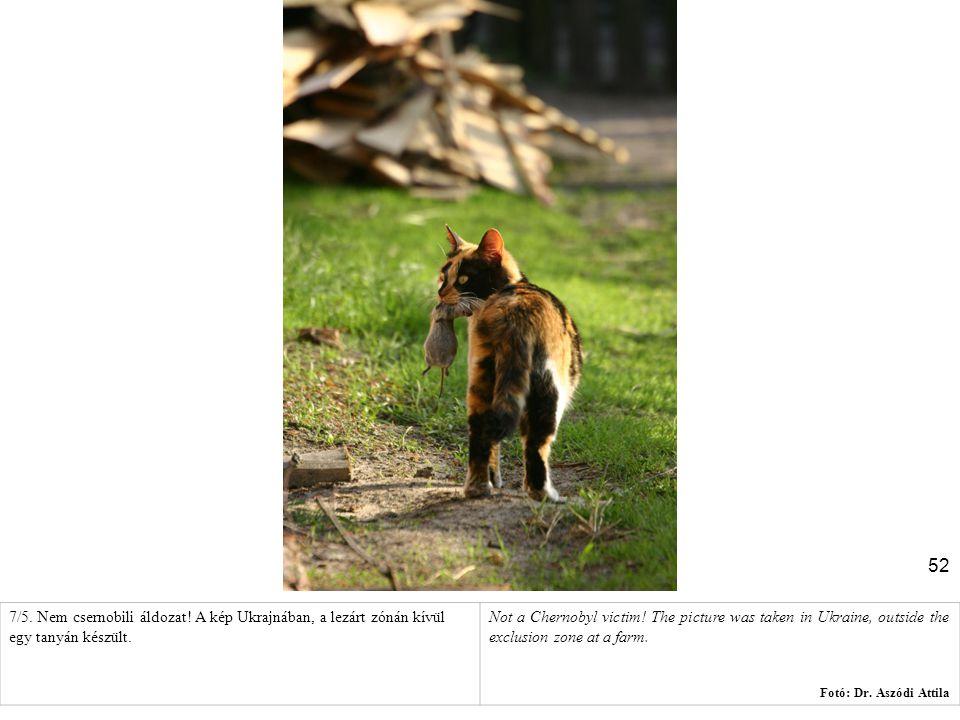 52 7/5. Nem csernobili áldozat! A kép Ukrajnában, a lezárt zónán kívül egy tanyán készült. Not a Chernobyl victim! The picture was taken in Ukraine, o