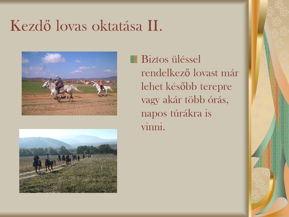 Kezd ő lovas oktatása II.