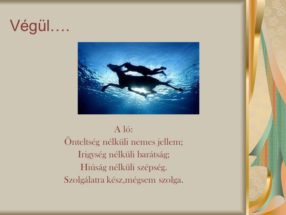 Végül….A ló: Önteltség nélküli nemes jellem; Irigység nélküli barátság; Hiúság nélküli szépség.
