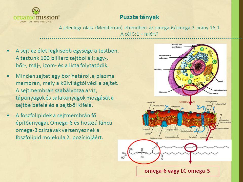 •A sejt az élet legkisebb egysége a testben. A testünk 100 billiárd sejtből áll; agy-, bőr-, máj-, izom- és a lista folytatódik. •Minden sejtet egy bő