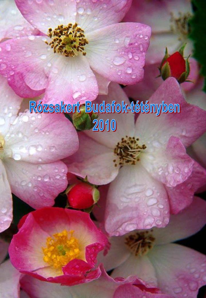 Perzsiában Nabukodonozor a rózsát palotájában díszként használta.