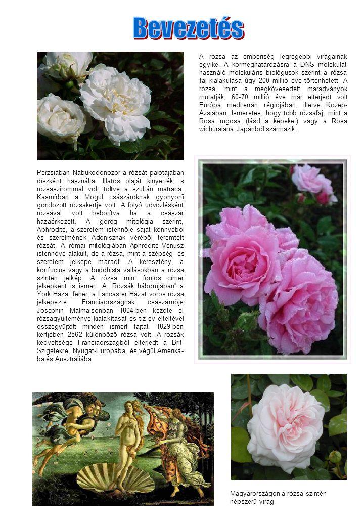 Perzsiában Nabukodonozor a rózsát palotájában díszként használta. Illatos olaját kinyerték, s rózsaszirommal volt töltve a szultán matraca. Kasmírban