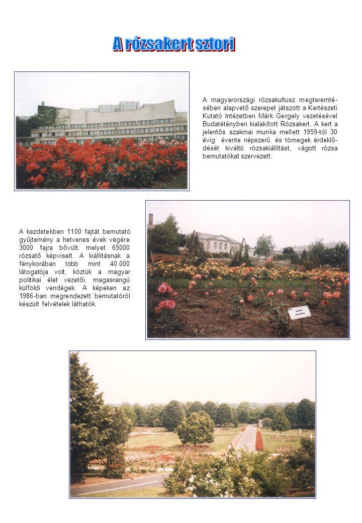 A magyarországi rózsakultusz megteremté- sében alapvető szerepet játszott a Kertészeti Kutató Intézetben Márk Gergely vezetésével Budatétényben kialak