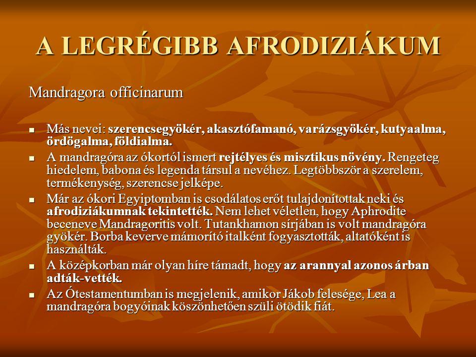 A LEGRÉGIBB AFRODIZIÁKUM Mandragora officinarum  Más nevei: szerencsegyökér, akasztófamanó, varázsgyökér, kutyaalma, ördögalma, földialma.  A mandra