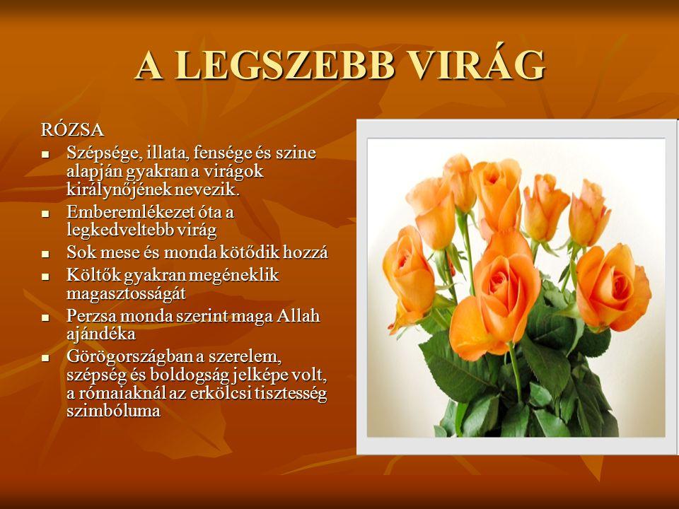 A LEGSZEBB VIRÁG RÓZSA  Szépsége, illata, fensége és szine alapján gyakran a virágok királynőjének nevezik.  Emberemlékezet óta a legkedveltebb virá