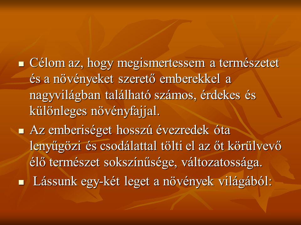 A LEGÉSZAKIBB VIRÁGOS NÖVÉNY FEDELÉKES KŐTÖRŐFŰ  Grönland északi részén él  Húsos testfelépitése megvédi a hidegtől, és kis teste ellenére virágai aránylag nagyok.