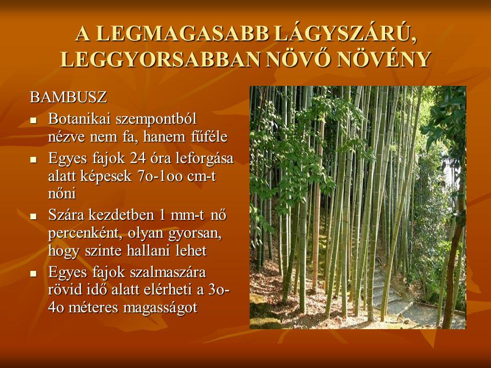 A LEGMAGASABB LÁGYSZÁRÚ, LEGGYORSABBAN NÖVŐ NÖVÉNY BAMBUSZ  Botanikai szempontból nézve nem fa, hanem fűféle  Egyes fajok 24 óra leforgása alatt kép