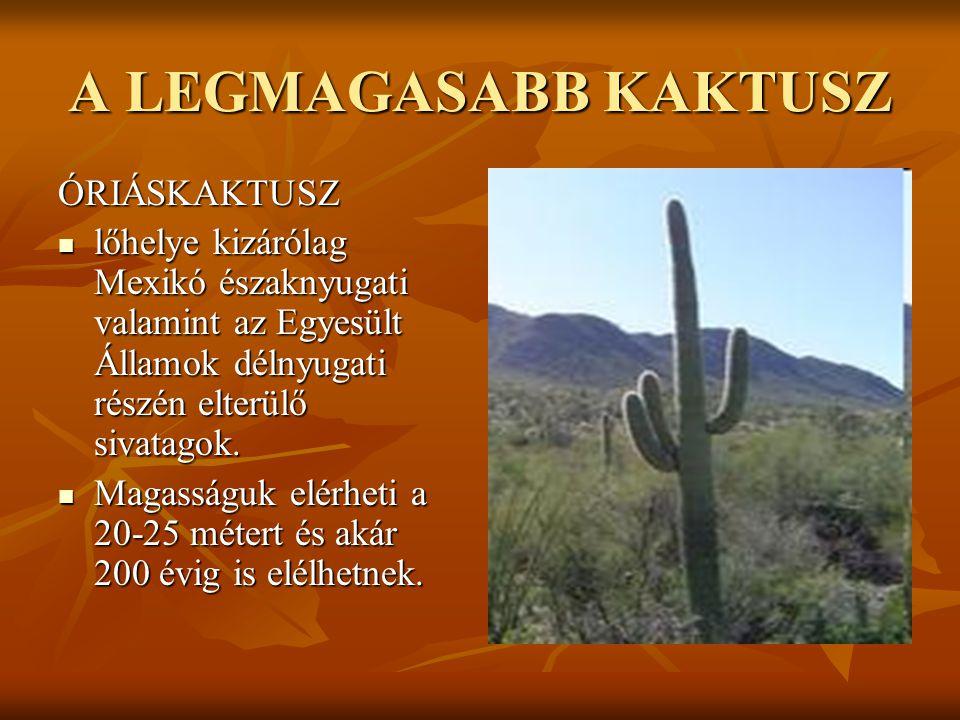 A LEGMAGASABB KAKTUSZ ÓRIÁSKAKTUSZ  lőhelye kizárólag Mexikó északnyugati valamint az Egyesült Államok délnyugati részén elterülő sivatagok.  Magass