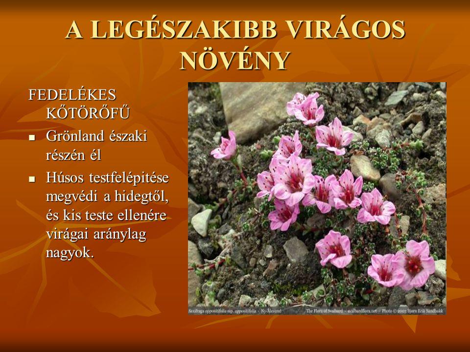 A LEGSZEBB VIRÁG RÓZSA  Szépsége, illata, fensége és szine alapján gyakran a virágok királynőjének nevezik.