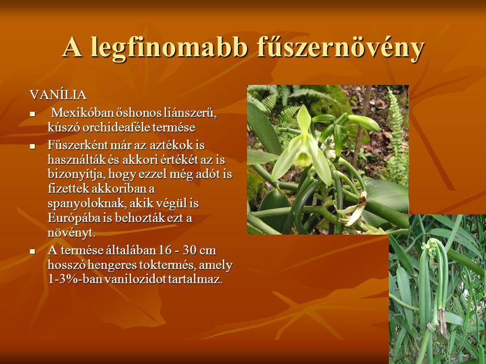 A legfinomabb fűszernövény VANÍLIA  Mexikóban őshonos liánszerű, kúszó orchideaféle termése  Fűszerként már az aztékok is használták és akkori érték