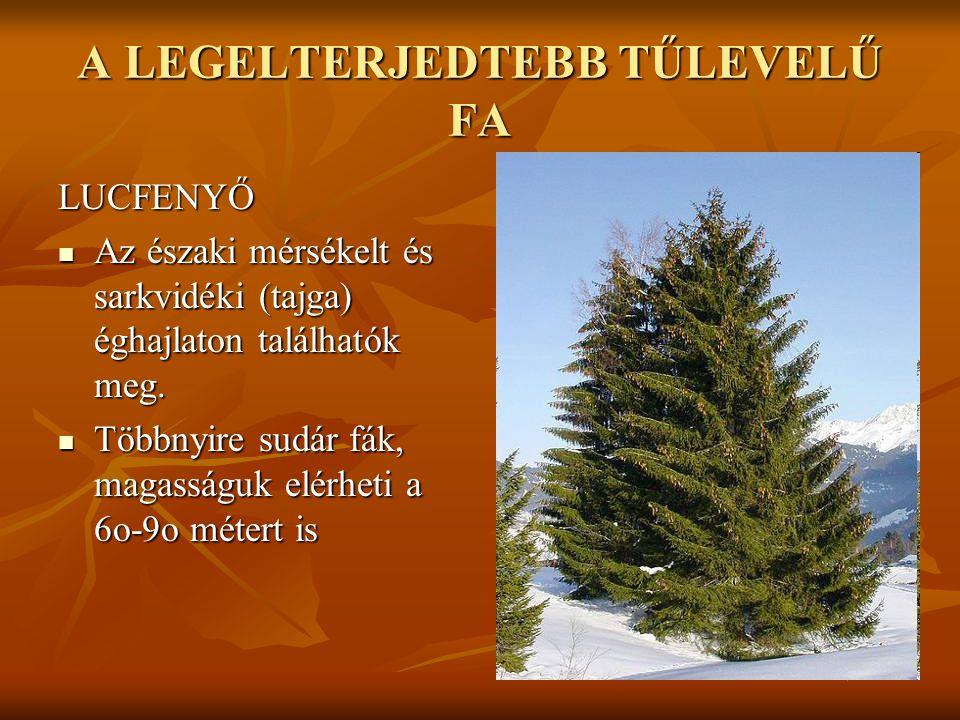 A LEGELTERJEDTEBB TŰLEVELŰ FA LUCFENYŐ  Az északi mérsékelt és sarkvidéki (tajga) éghajlaton találhatók meg.  Többnyire sudár fák, magasságuk elérhe