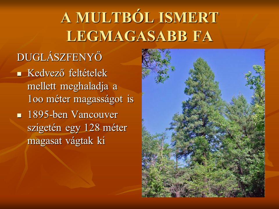 A MA ÉLŐ LEGMAGASABB FA ÖRÖKZÖLD MAMUTFENYŐ  a legmagasabb 112,7 méteres  Azt találták, hogy a világ legmagasabb fái legfeljebb 130 méterre tudnak nőni.