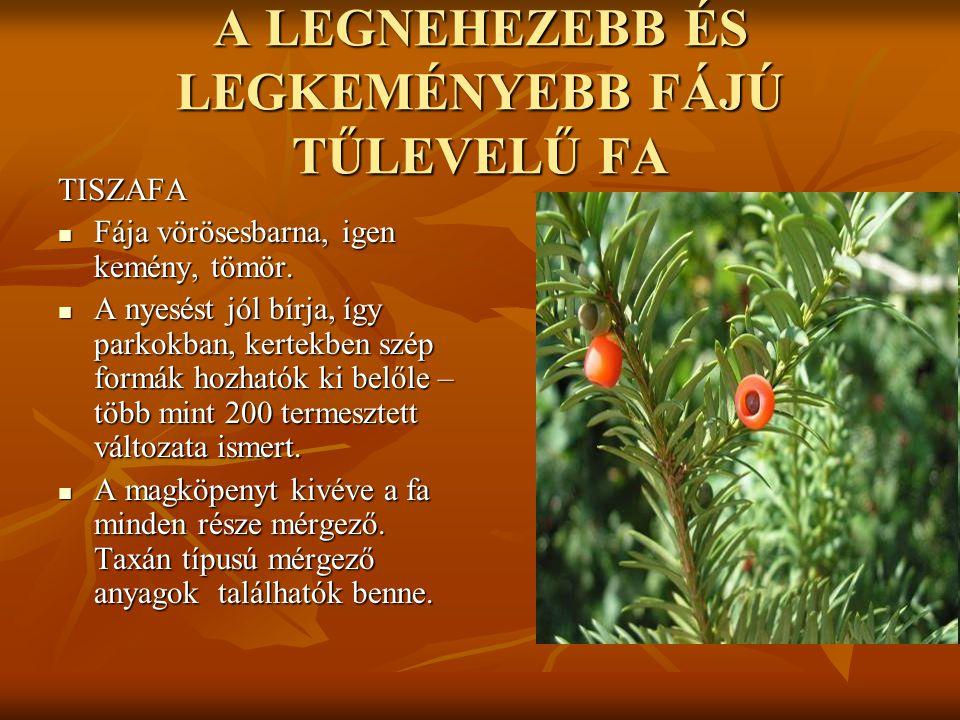 A LEGNEHEZEBB ÉS LEGKEMÉNYEBB FÁJÚ TŰLEVELŰ FA TISZAFA  Fája vörösesbarna, igen kemény, tömör.  A nyesést jól bírja, így parkokban, kertekben szép f
