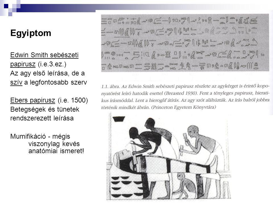 Egyiptom Edwin Smith sebészeti papirusz (i.e.3.ez.) Az agy első leírása, de a szív a legfontosabb szerv Ebers papirusz (i.e. 1500) Betegségek és tünet