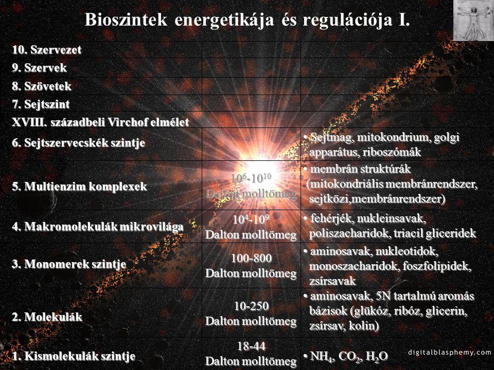 Bioszintek energetikája és regulációja I. • Sejtmag, mitokondrium, golgi apparátus, riboszómák 10. Szervezet 9. Szervek 8. Szövetek 7. Sejtszint XVIII