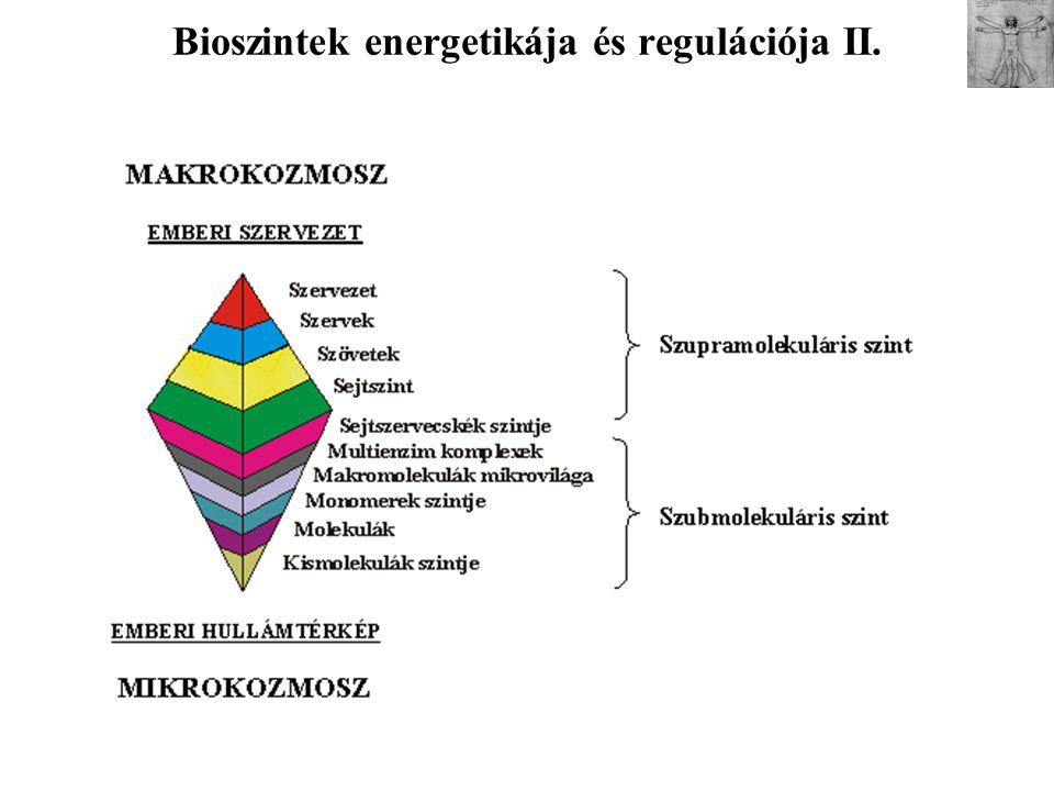 Bioszintek energetikája és regulációja II.