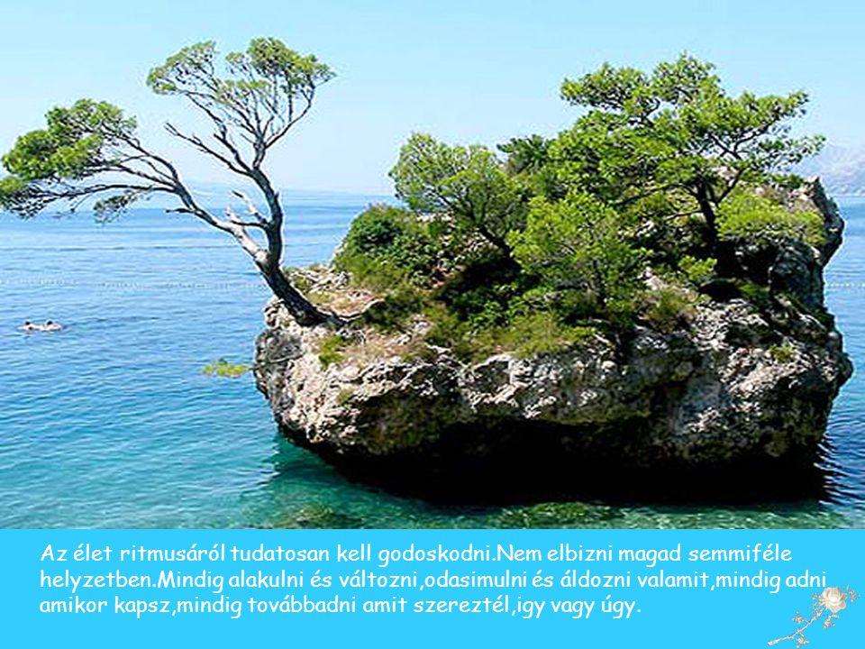 Tanulj szerénységet,örülj a szépségnek,s ne várj tőle mást,mint amit adhat..Az élet melegségét keresd másutt.,.........................