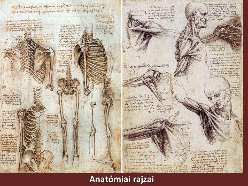Anatómiai rajzai