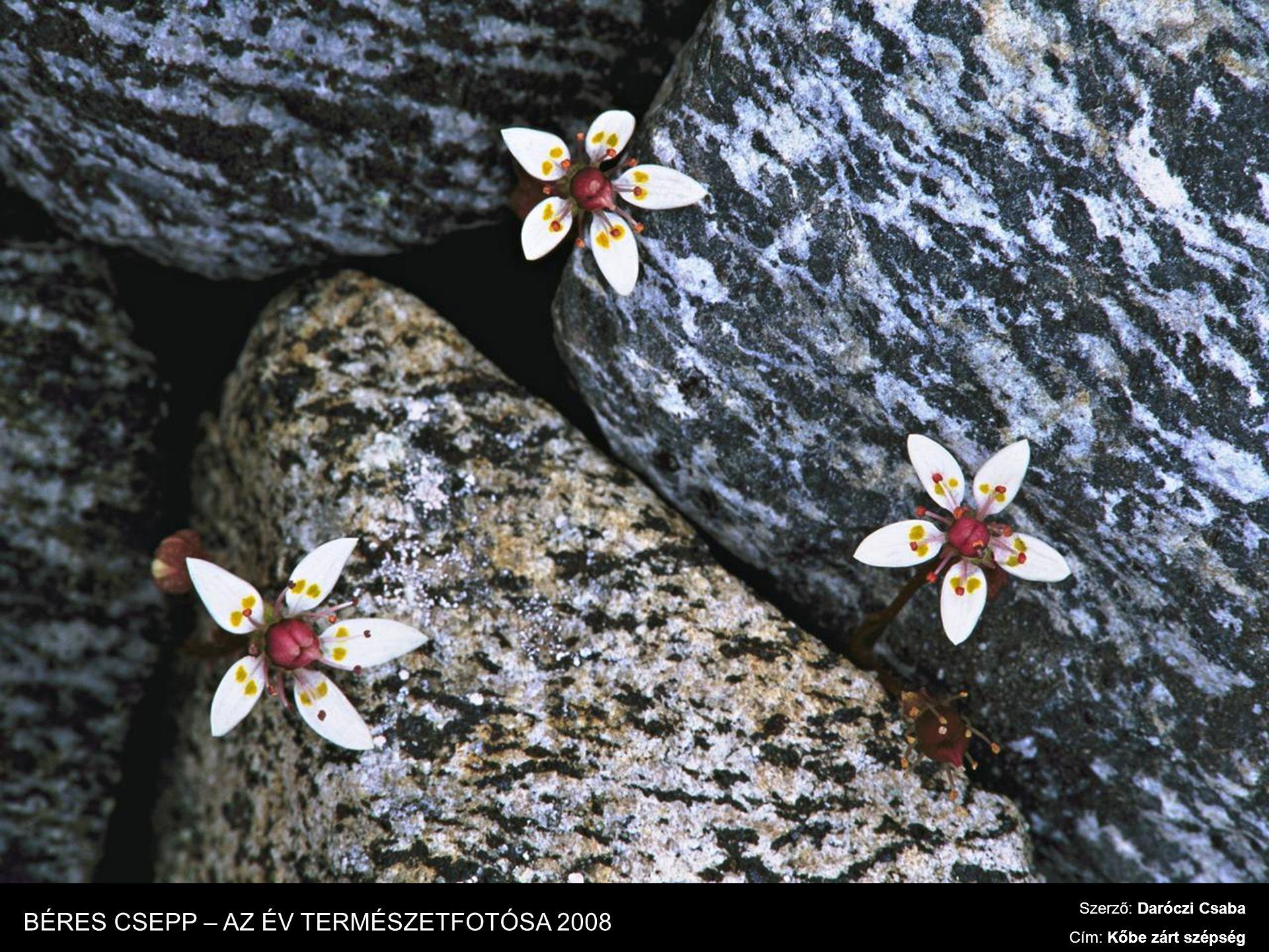 Szerző: Daróczi Csaba Cím: Kőbe zárt szépség BÉRES CSEPP – AZ ÉV TERMÉSZETFOTÓSA 2008