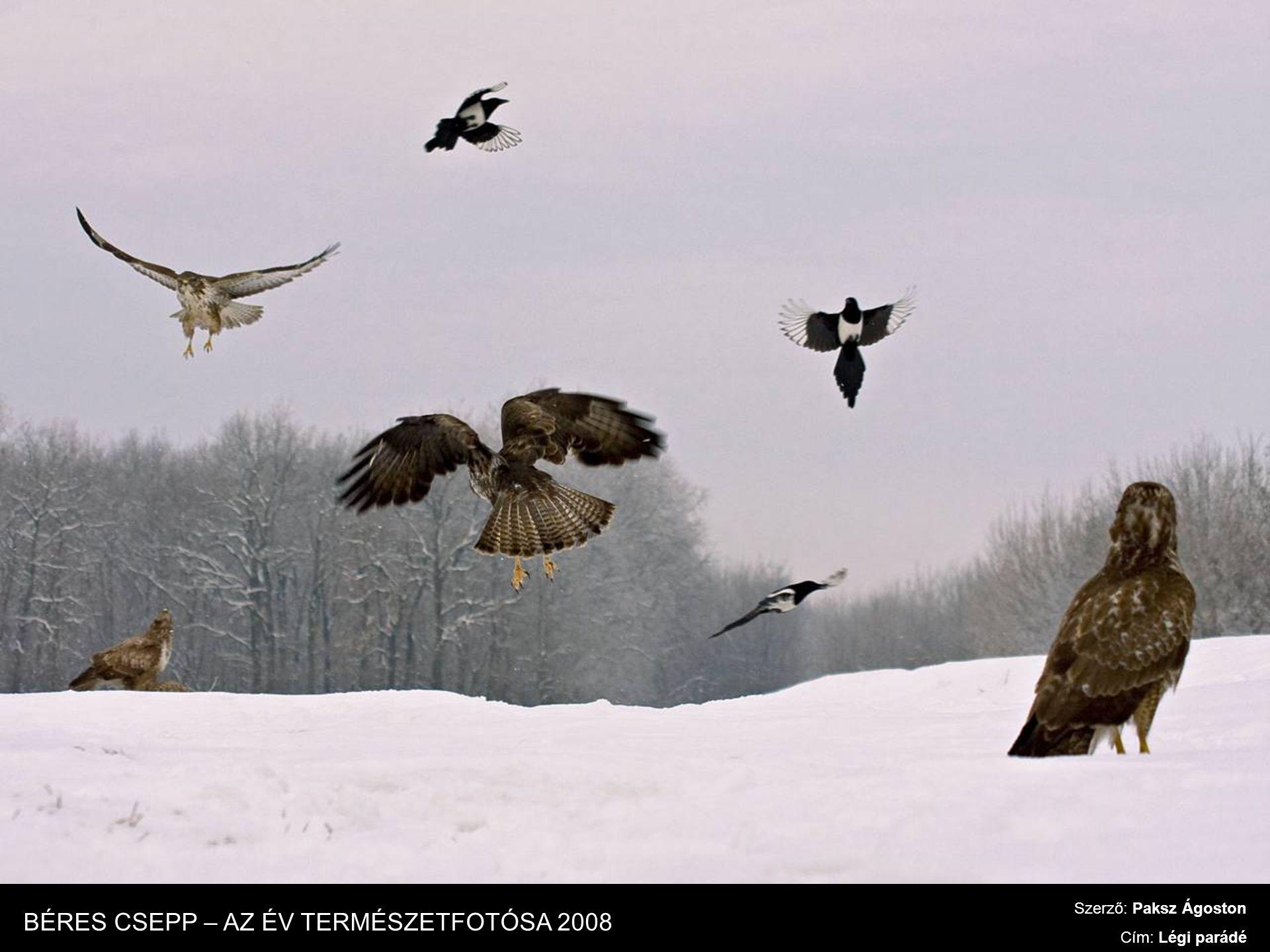 Szerző: Paksz Ágoston Cím: Légi parádé BÉRES CSEPP – AZ ÉV TERMÉSZETFOTÓSA 2008