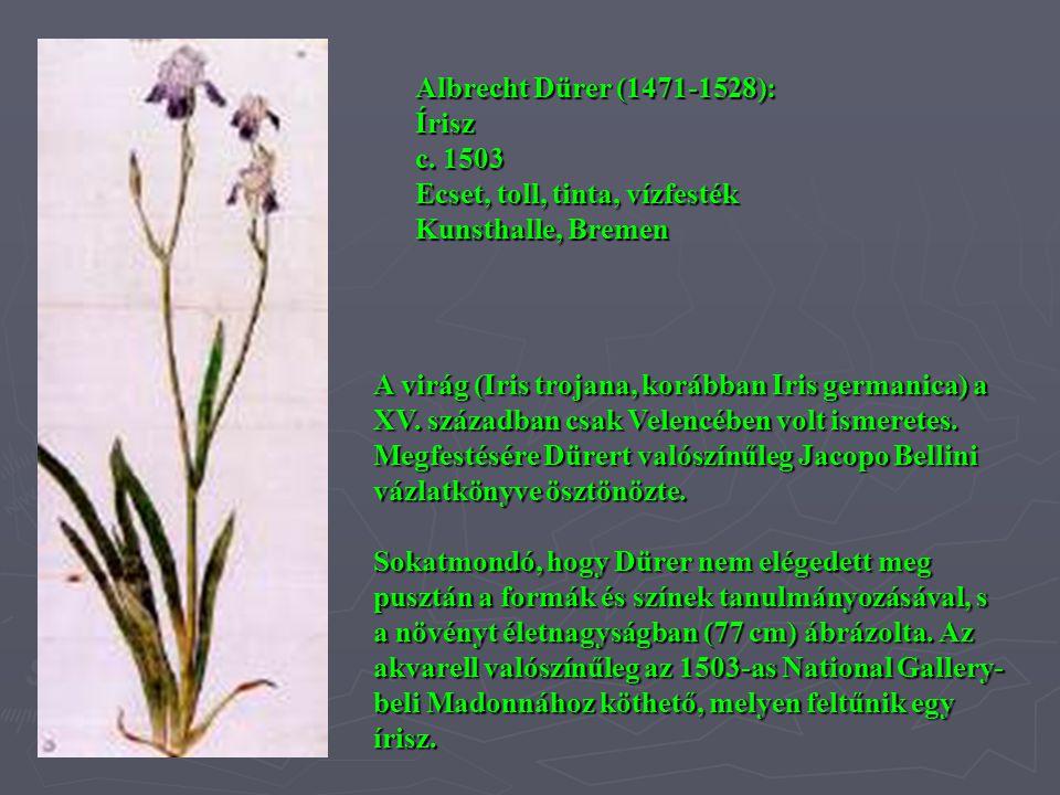 A virág (Iris trojana, korábban Iris germanica) a XV. században csak Velencében volt ismeretes. Megfestésére Dürert valószínűleg Jacopo Bellini vázlat
