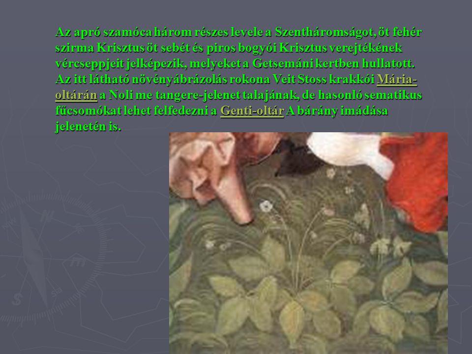 Az apró szamóca három részes levele a Szentháromságot, öt fehér szirma Krisztus öt sebét és piros bogyói Krisztus verejtékének vércseppjeit jelképezik