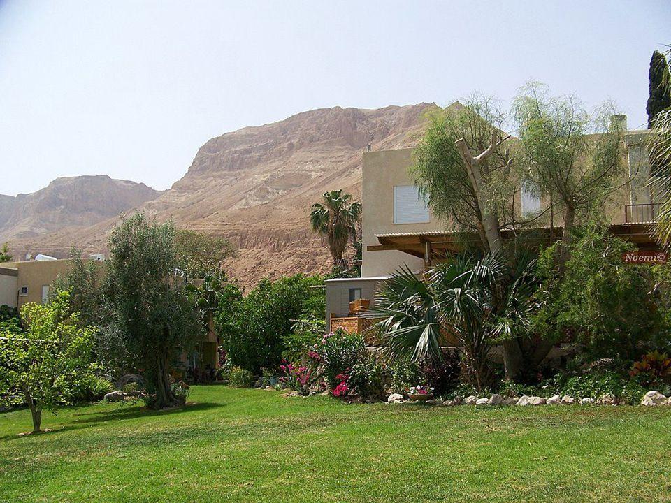 Ein Gedi egy kibbutz és egy nemzeti park neve is Izraelben, a Holt- tenger mellett.
