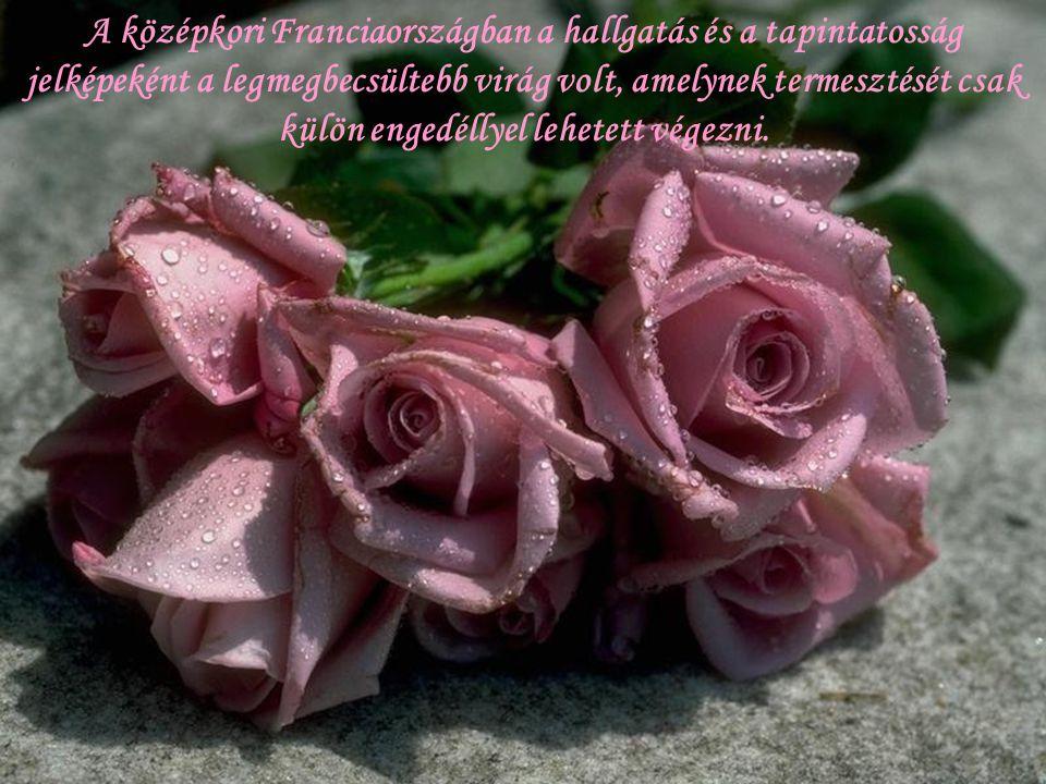 A muzulmánok úgy tartották, hogy a fehér rózsa a mennybe szálló Mohamed verejtékéből nőtt, ezért a rózsának a rózsaszirmokból készített rózsaolajnak é