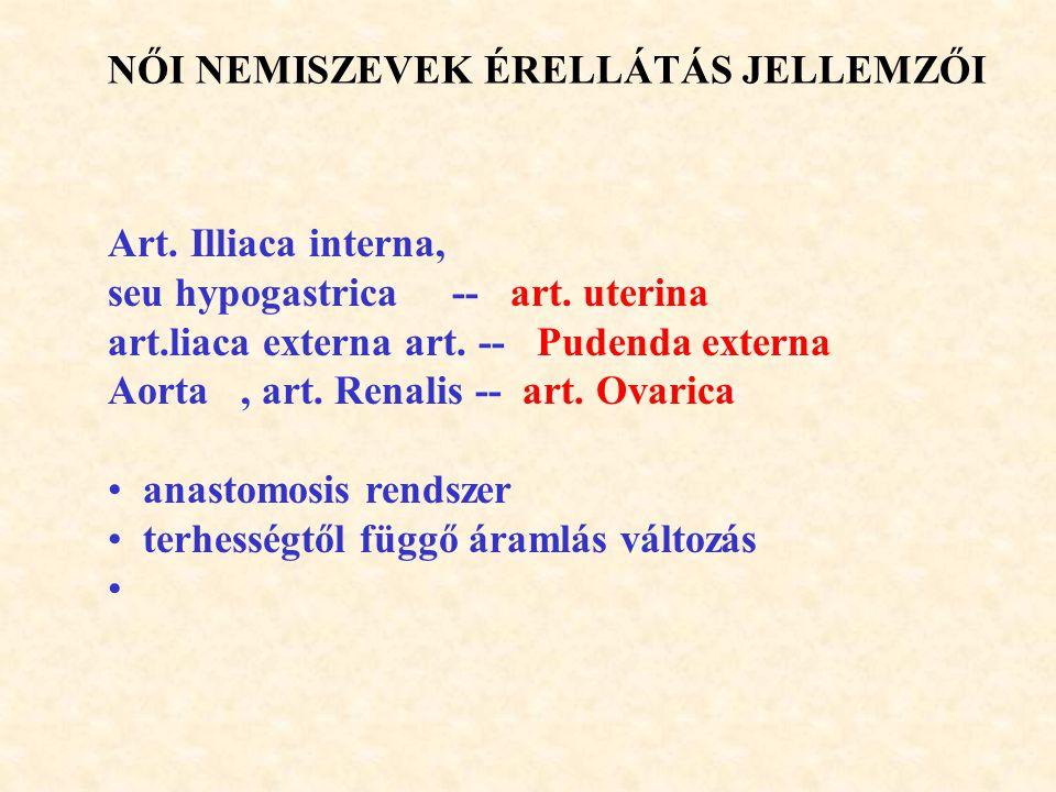 NŐI NEMISZEVEK ÉRELLÁTÁS JELLEMZŐI Art. Illiaca interna, seu hypogastrica -- art. uterina art.liaca externa art. -- Pudenda externa Aorta, art. Renali