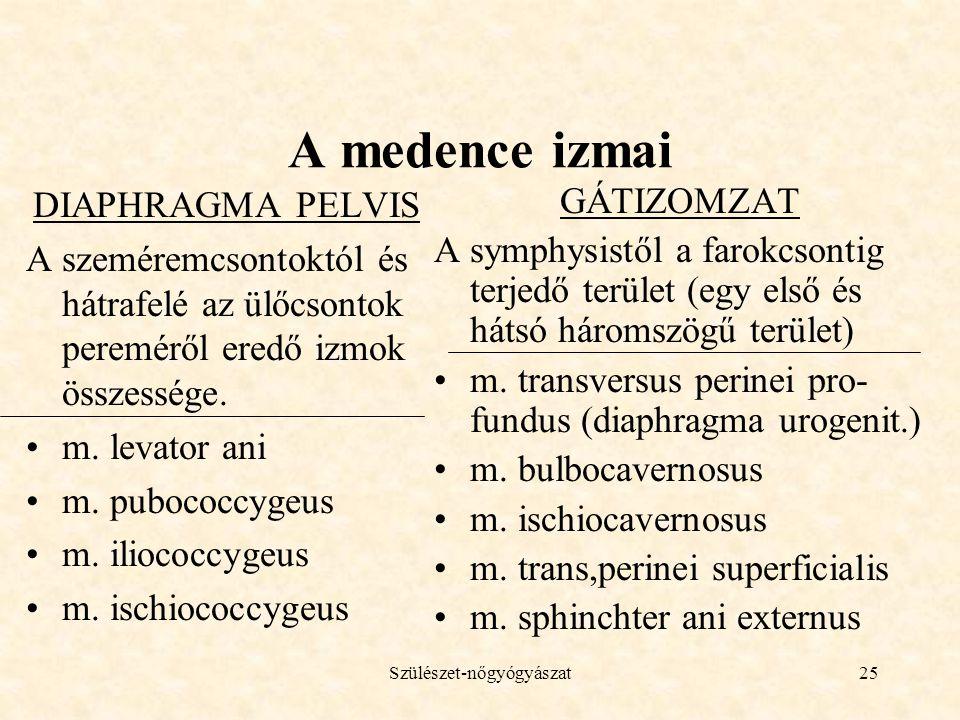 Szülészet-nőgyógyászat25 A medence izmai DIAPHRAGMA PELVIS A szeméremcsontoktól és hátrafelé az ülőcsontok pereméről eredő izmok összessége. •m. levat
