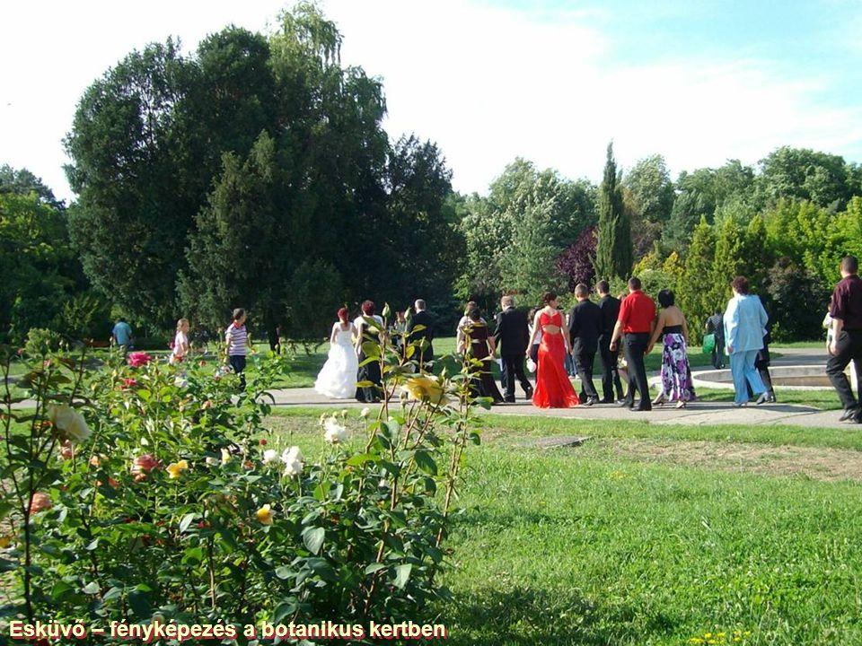 Paranormális: Oroszlánfej a fatönkön a Temes partján